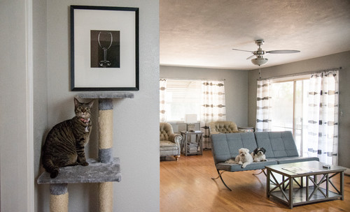 See a Customized Home Indoors and Out for Dogs and Cats