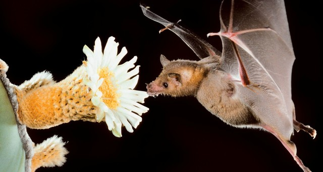 The Truth About Bats: 3 Reasons to Love Them