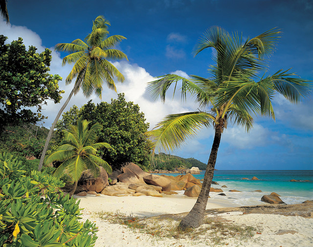- Palm Trees On The Beach Mural Wallpaper & Reviews