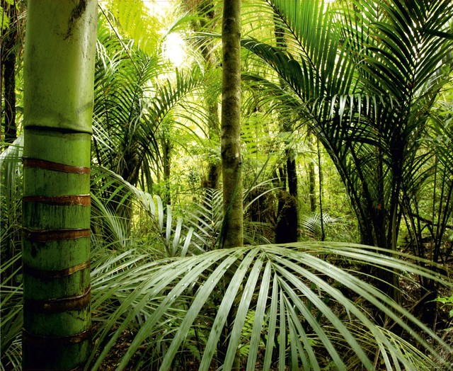 Green Tropical Forest Wall Mural Non Woven Photo Wallpaper Made In Europe