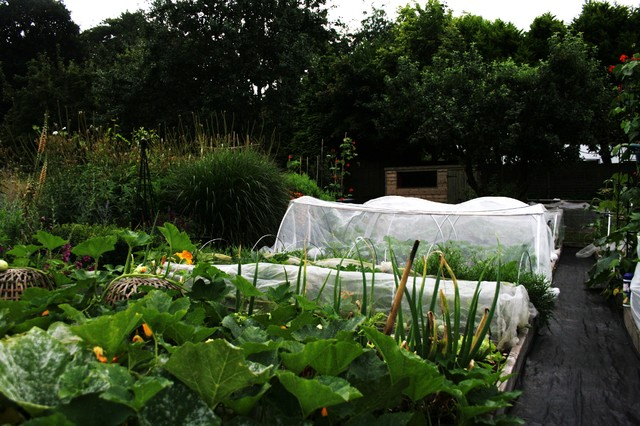 Food And Community Thrive In A U K Allotment Garden