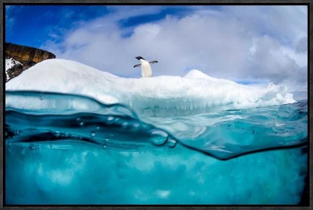 """""""adelie Penguin On Iceberg"""" Artwork, 22""""x14.5""""."""
