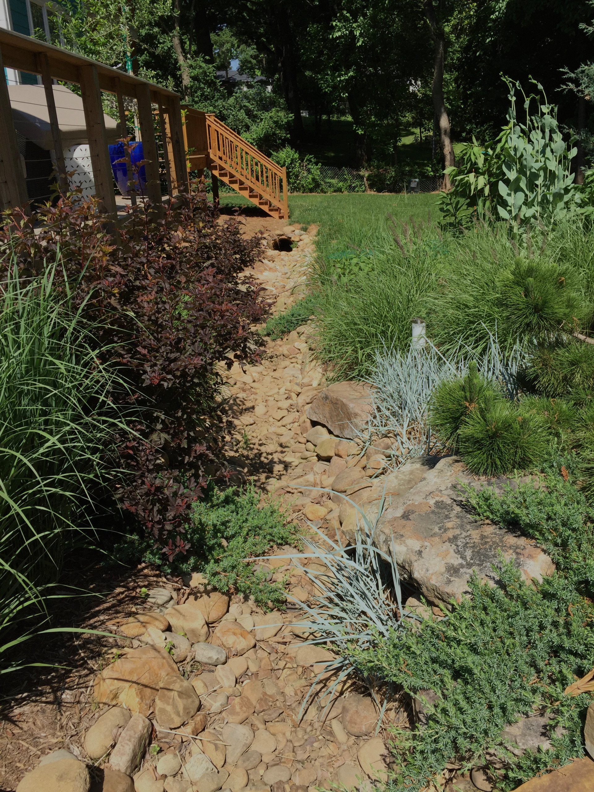 Drainage ditch turned creek bed/meadow garden