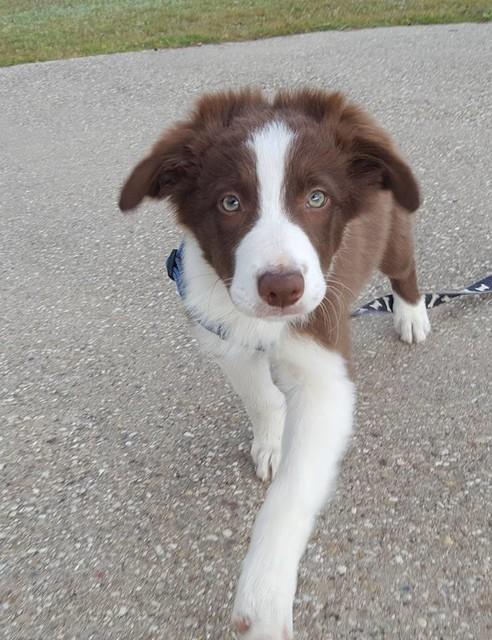 Puppy Drags Sprinkler Through Doggy Door, Chaos Ensues