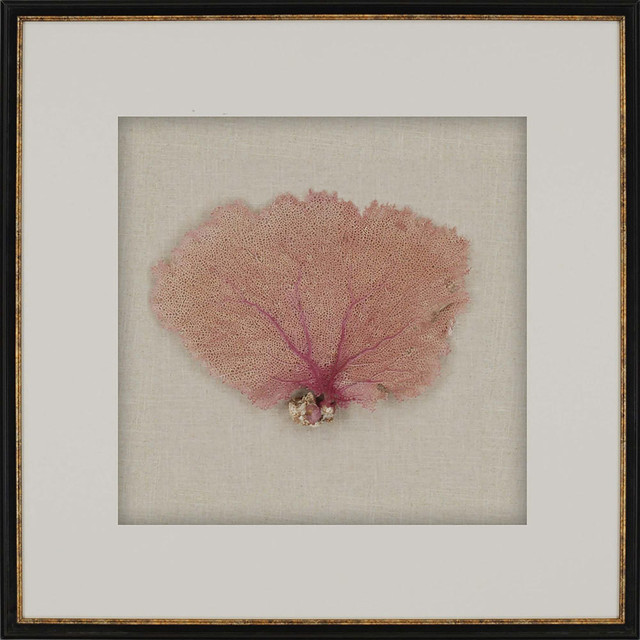 "7236 ""sea Fan"" Framed Art."