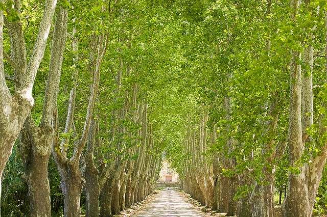 Provence Tree Lined Driveway Wallpaper Wall Mural, Self Adhesive  Contemporary Wall Decals Part 69