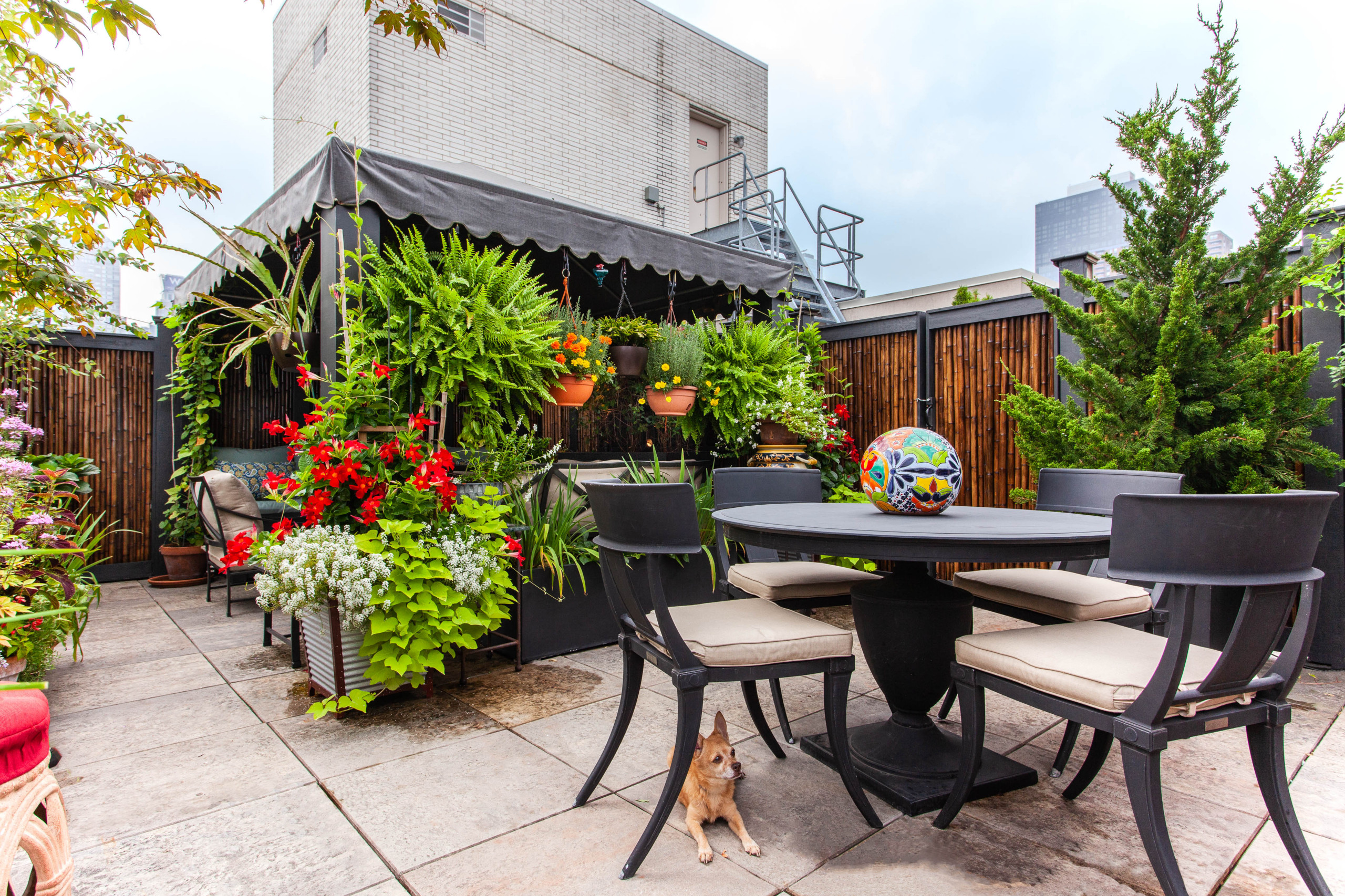 Hell's Kitchen Roof Garden
