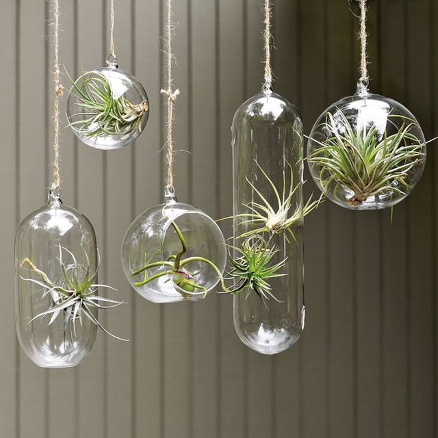 Shane Powers Hanging Glass Bubble Collection