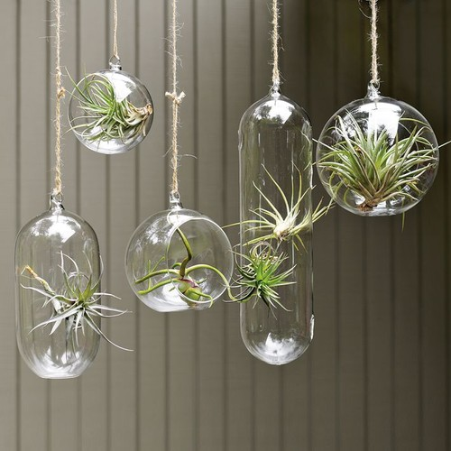 Shane Powers Hanging Glass Bubble Collection modern indoor pots and planters