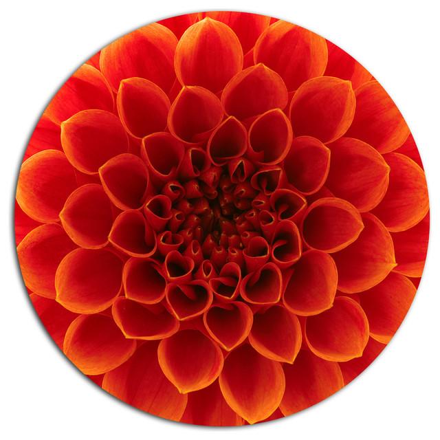 close up orange flower petals floral large disc metal. Black Bedroom Furniture Sets. Home Design Ideas