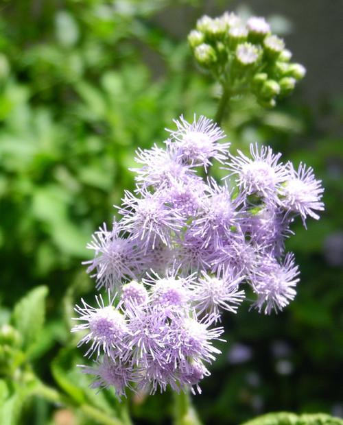 Atraer las abejas a su patio y jardín | Jardinero Central de Texas
