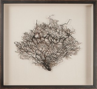 Mirror Image 30052 Natural Coral Sea Fan Framed Art Large