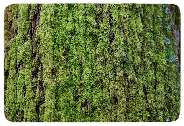 Susan sanders emerald moss green nature memory foam bath for Natural moss bath mat