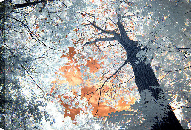 """""""trees Iii"""" Landscape Photography Wall Art By P.t. Ruk, 36""""x24""""."""