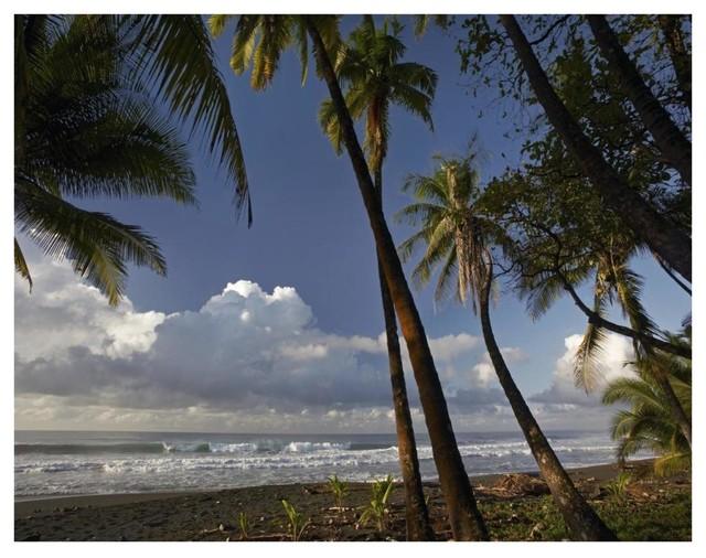 Quot Palm Trees On The Beach Near Marino Ballena Np Costa