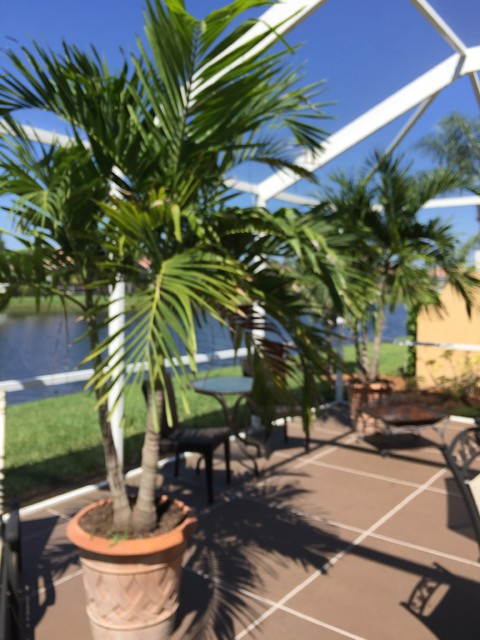 Outside Patio Lanai Florida Home