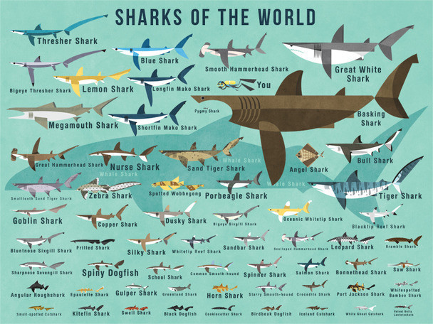 Oopsy Daisy Fine Art For Kids Quot Sharks Of The World