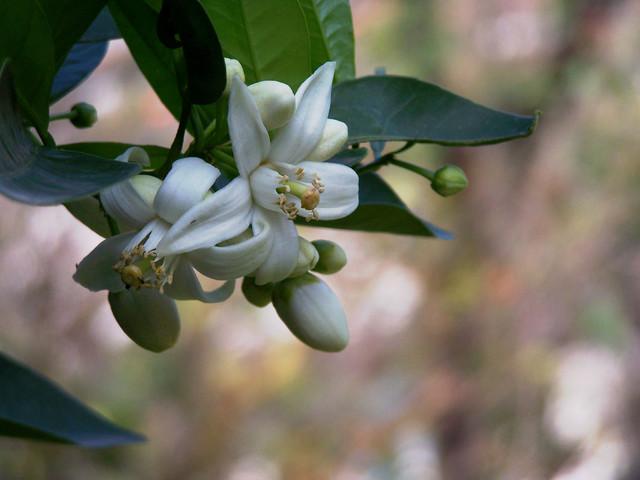 Albero Con Fiori Bianchi.Esistono Almeno 13 Alberi Da Frutta Con Fiori Meravigliosi
