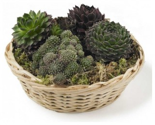 Basket of Succulents eclectic outdoor decor
