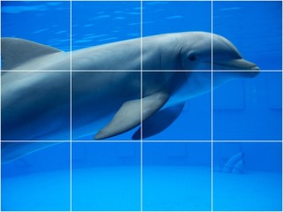 Dolphin picture kitchen bathroom ceramic tile mural 1466 for Dolphin tile mural