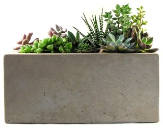 Concrete Planter - Modern - Indoor Pots And Planters - by Rough Fusion