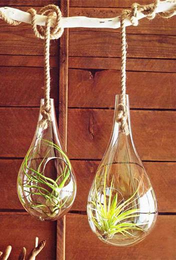 Glass Hanging Terrariums