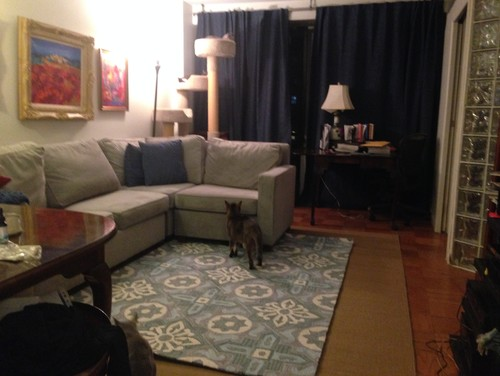 Anyway, All Ideas Welcome  Light Grey Sofa And Royal Blue Curtains And I  Can Get New Pillows As Needed. I Cannot Paint The Walls As This Is A NYC  Apt That I ...