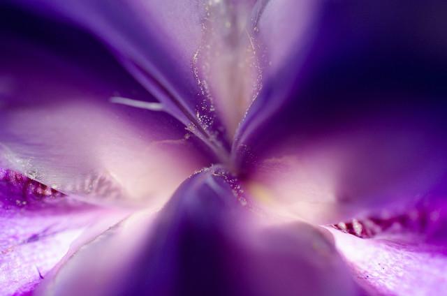 """""""Iris Center Petals"""" Nature Photography, Floral Unframed Wall Art Print, 11""""x14"""""""