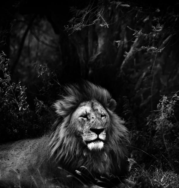 Contemporary art photography wildlife photography artwork los