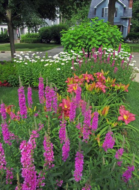 Garden Forum   Plant Identification Needed