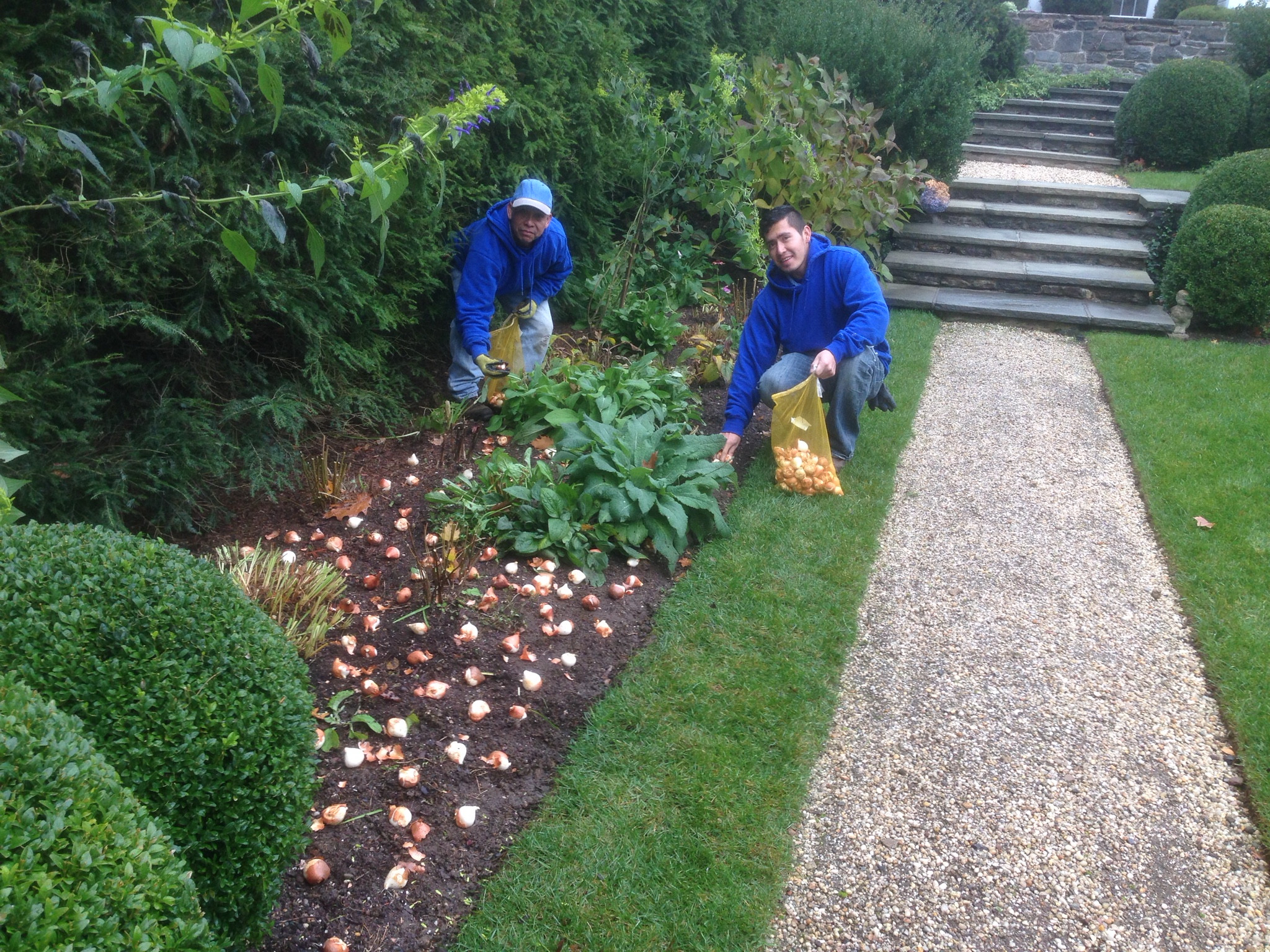 Beds and Borders - Perennial, Bulb and Annual