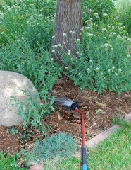 Rocky Mountain Gardener's August Checklist