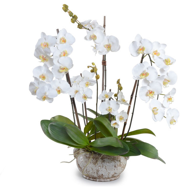 Perfect Phalaenopsis Orchid Arrangement, Large White - Transitional  LB68