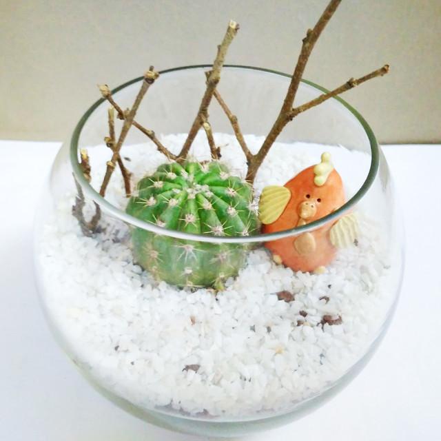 Petite Gardens: Desert Companions
