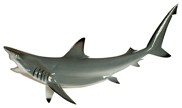 50 black tip shark grey half mount fish replica beach for Mount this fish company