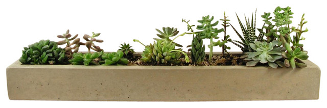 Concrete Tray Planter - Modern - Indoor Pots And Planters - by ...