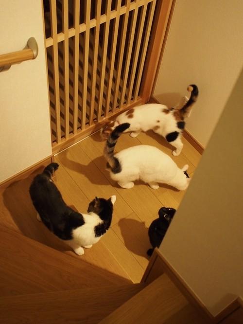 【Houzz】猫と人の幸せな暮らし:「福を招く猫」千葉ちゃんと「猫と建築社」の日常 15番目の画像