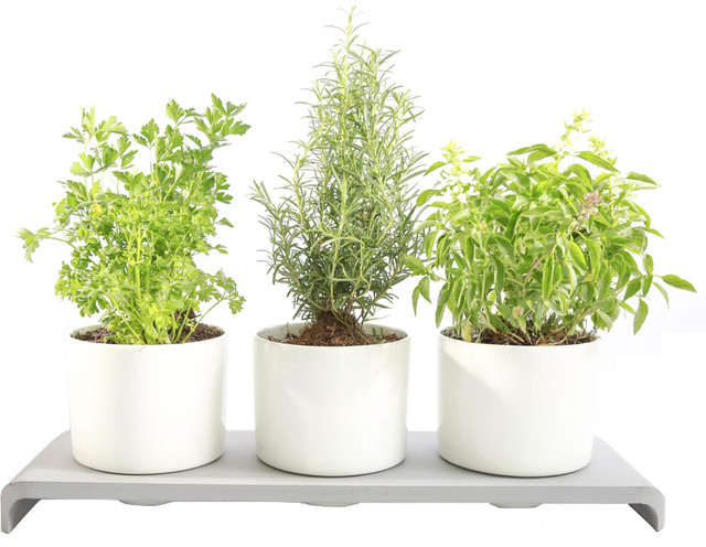 U herb indoor garden contemporary indoor pots and planters by intoconcrete