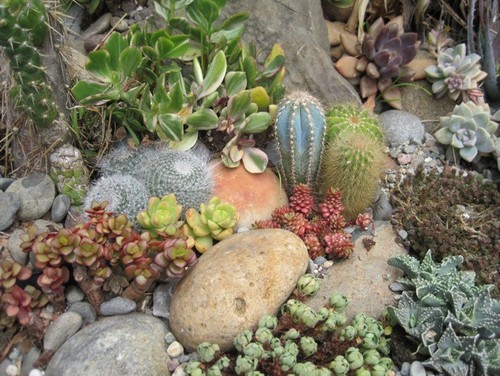 Some photos of my succulent rock garden