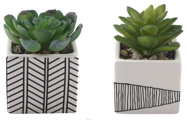 2 Piece Succulent Tribal White Ceramic Pot Set 4 Contemporary Artificial Plants And Trees By Flora Bunda Inc Houzz