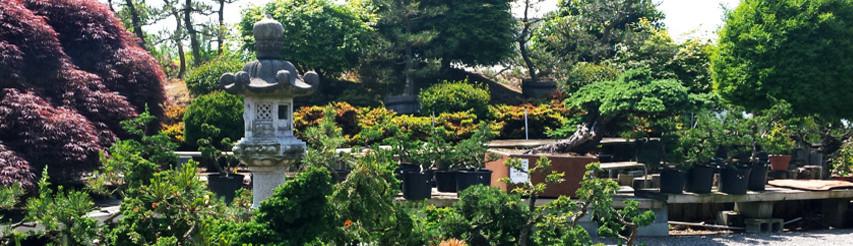 Japan Bonsai Garden Art