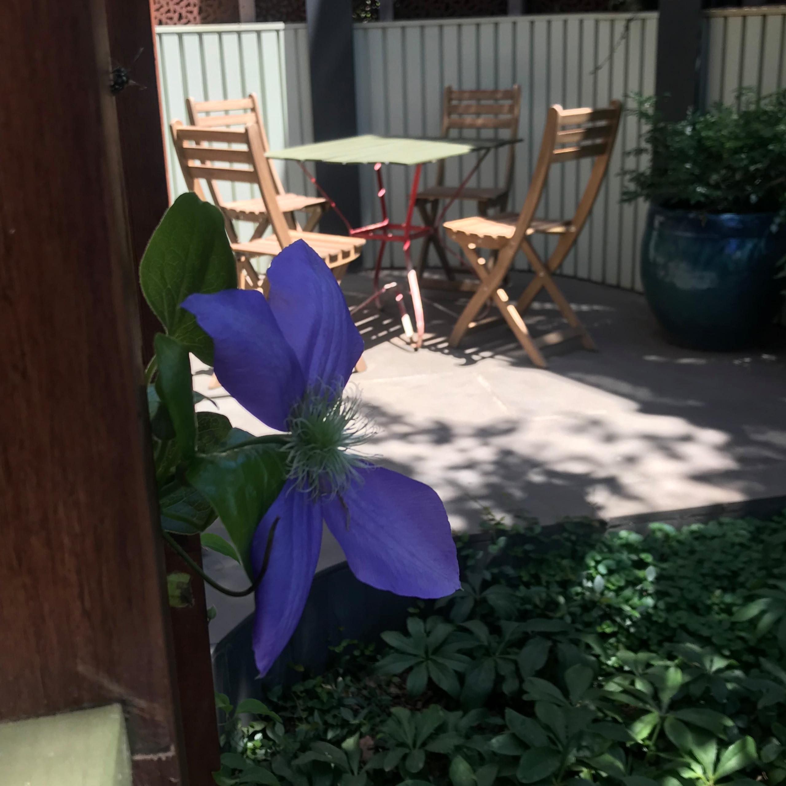 Clifton Hill 'Scarborough ' Back Garden
