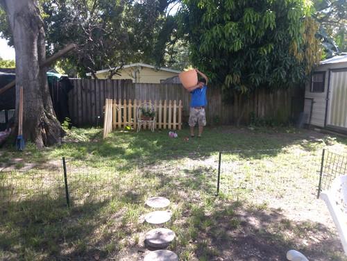 Need A Dog Friendly Back Yard Design!!!