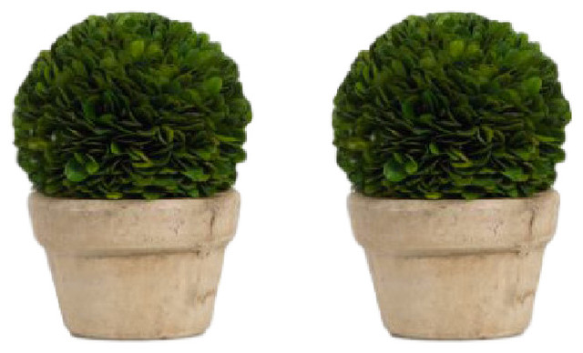 Preserved Boxwood Topiary, Single Ball (Set of 2)