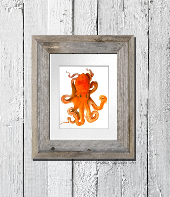 Orange Wall Art orange octopus wall art print great as kids room or bathroom decor