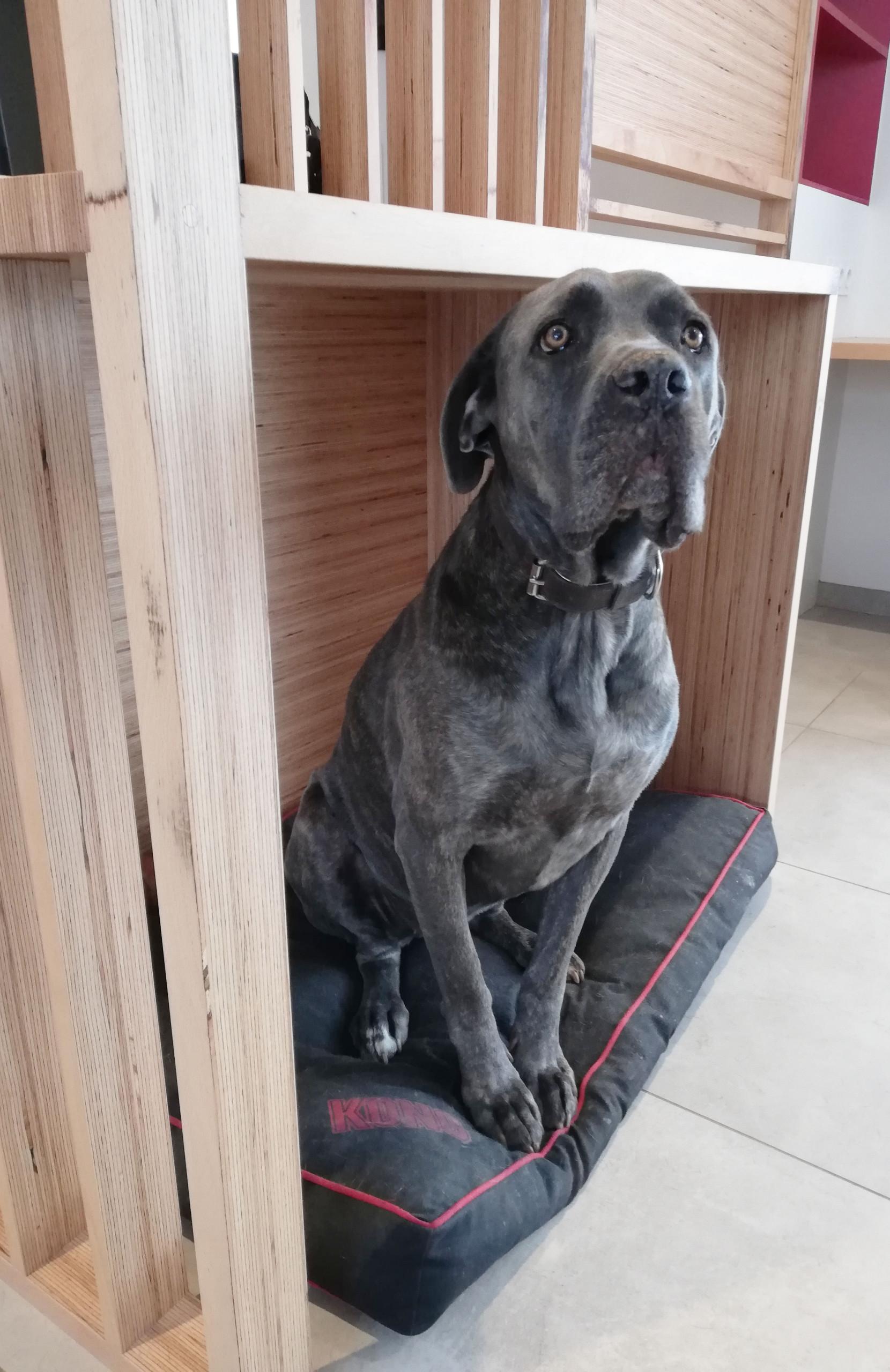 Claustra Baubuche® - Espace panier du chien