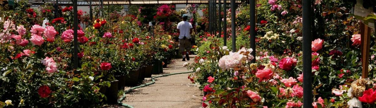 San Gabriel Nursery Florist