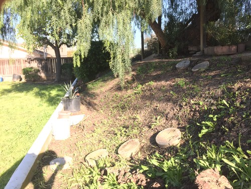 Ideas for tiered slope landscape Zone 10 (San Diego)