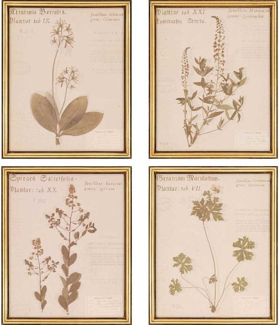 "Botanicals Artwork, Set Of 4, 18""x22""."