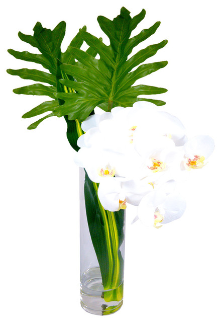 Phalaenopsis Orchid With Xanadu Leaves In 16 Cylinder Vase